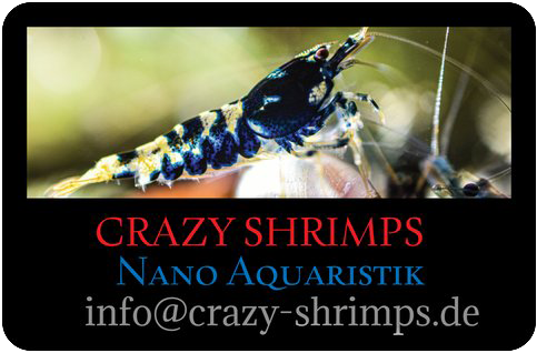 Crazy-Shrimps.de-Logo